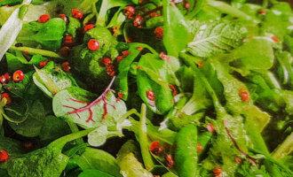 Зеленый салат с перечной заправкой